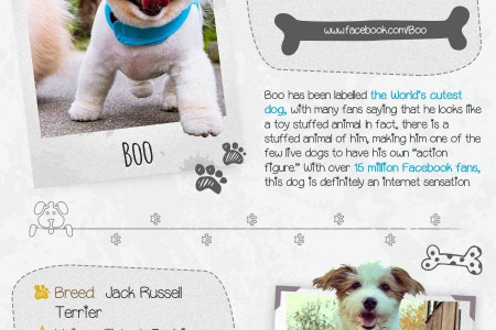 'The most important dogs on the internet RIGHT NOW' Infographic