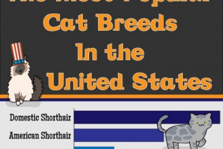 The Most Popular Cat Breeds In The United States Infographic