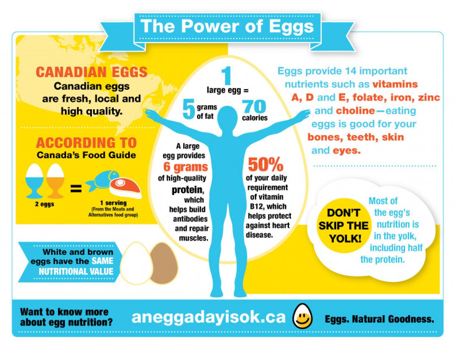 The Power of Eggs Infographic