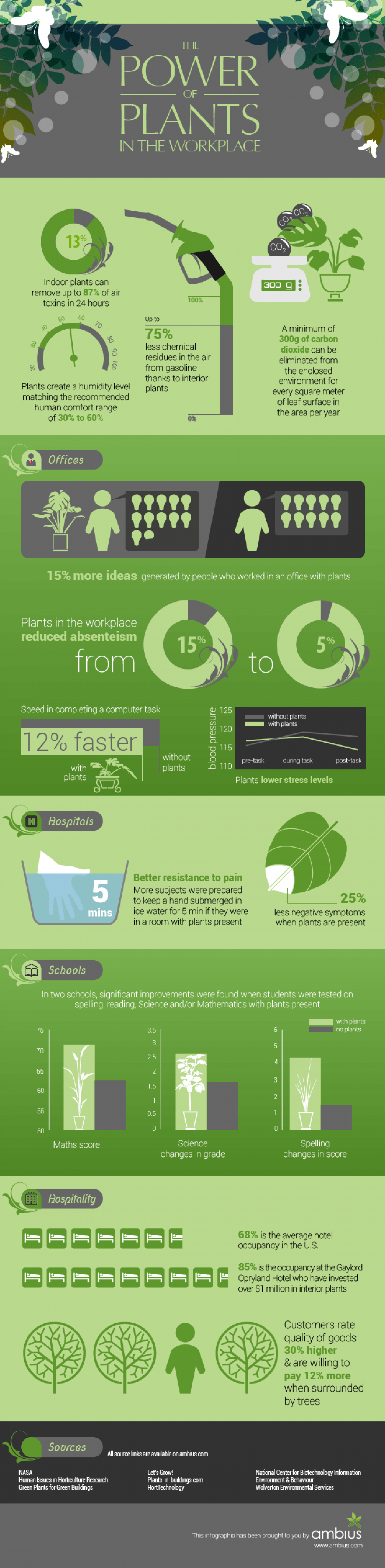 The Power of Plants in the Workplace Infographic