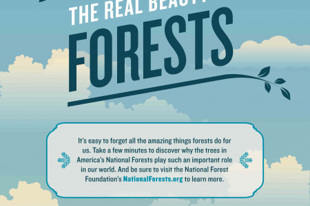 The Real Beauty of Forests Infographic