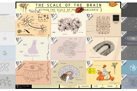 The Scale of The Brain Within The Scale of The Universe Infographic