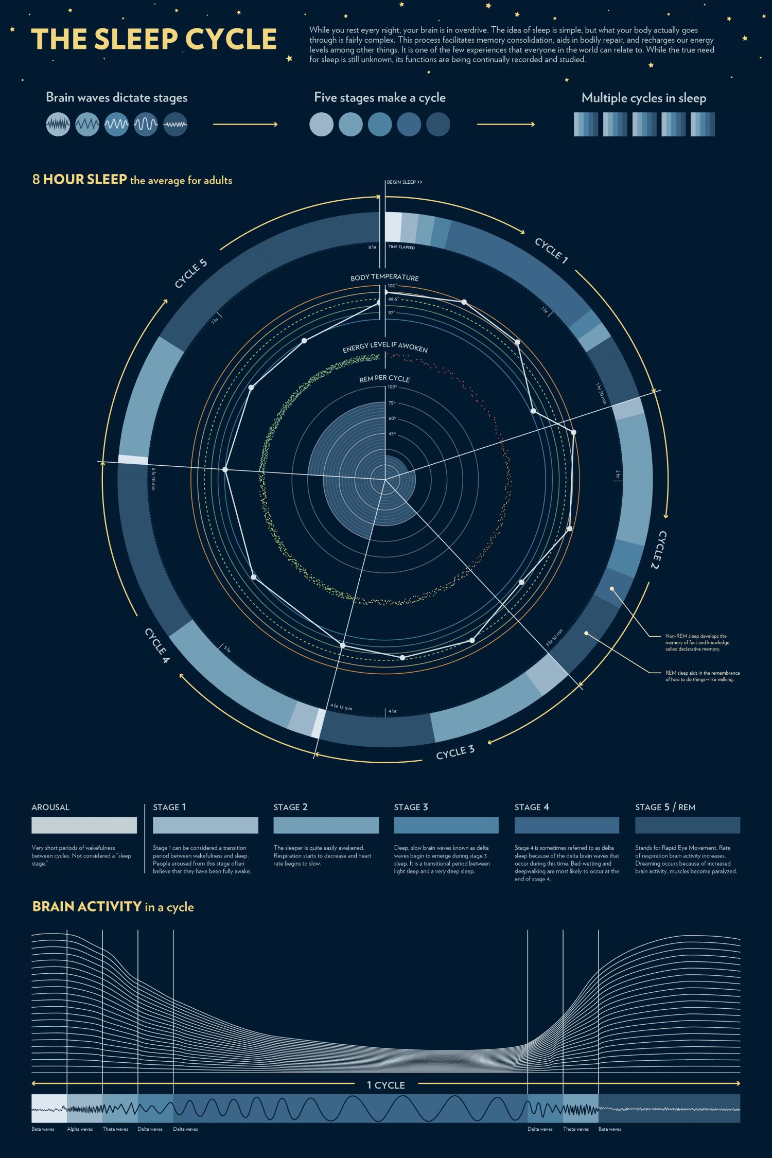 The Sleep Cycle Infographic