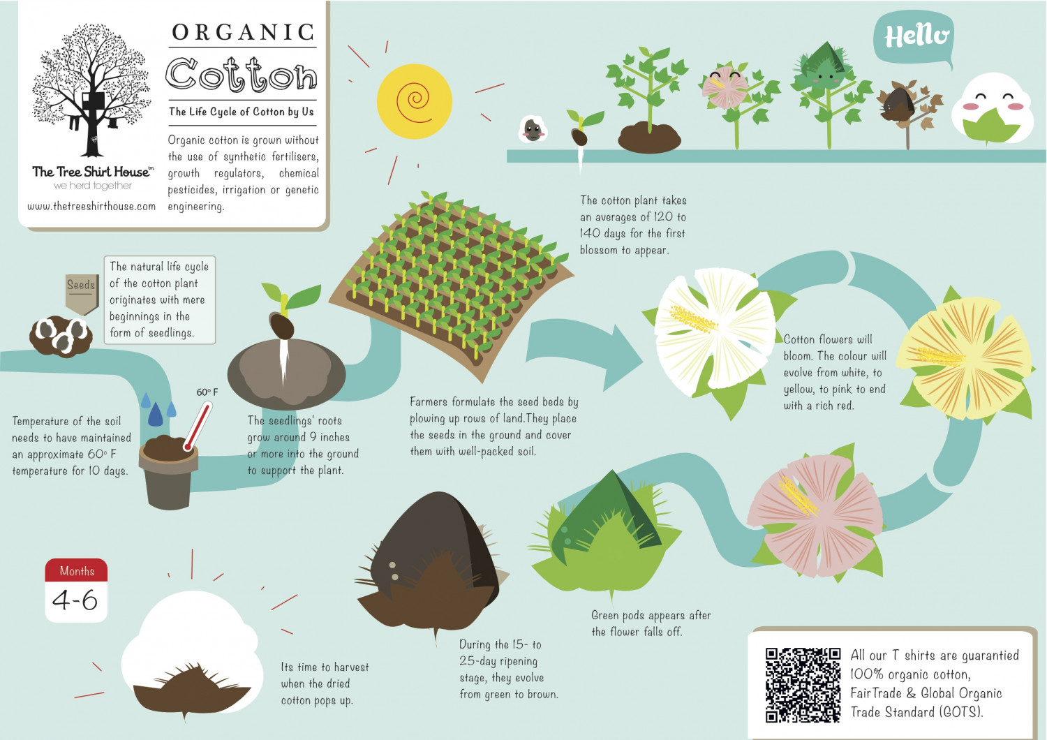 The TSH's organic cotton's lifecycle Infographic