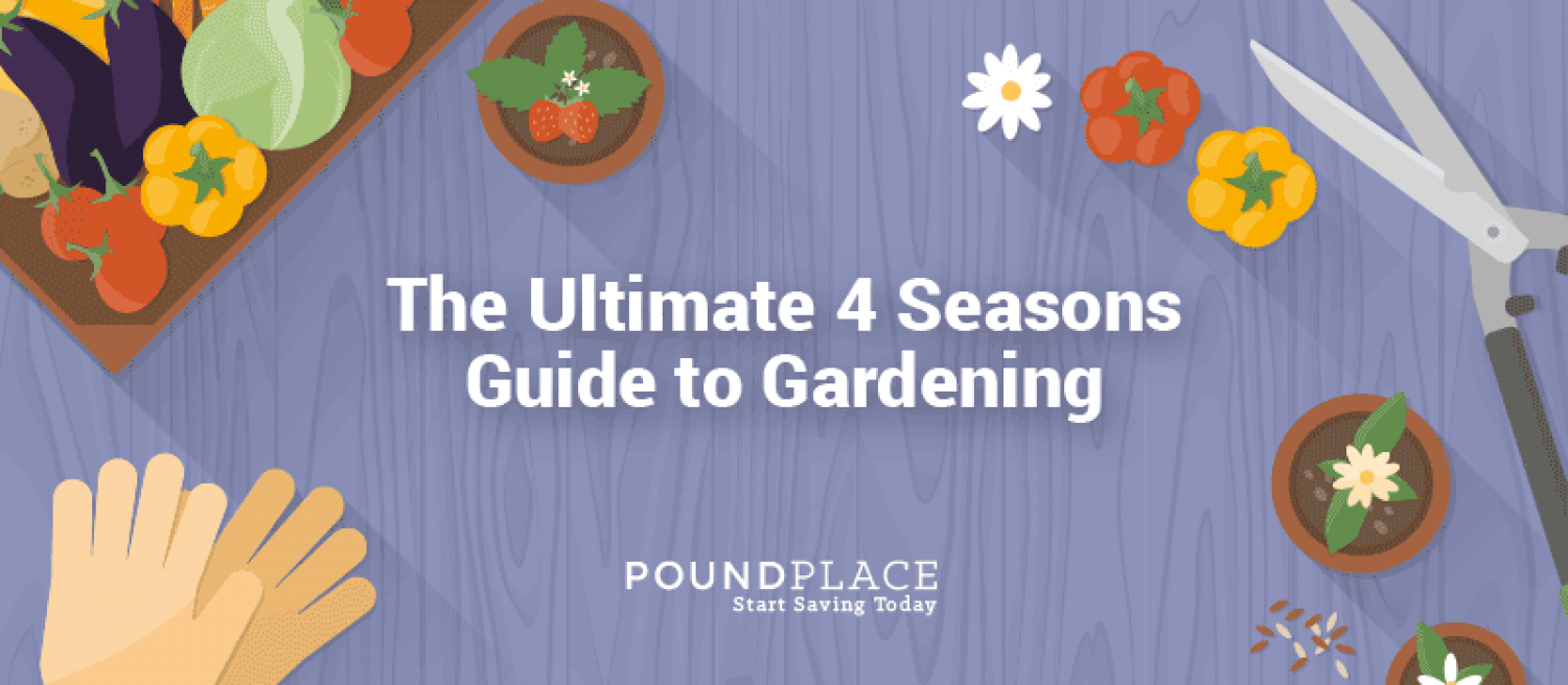 The Ultimate 4 Seasons Guide To Gardening Infographic