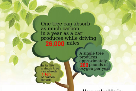 The Value of a Tree Infographic