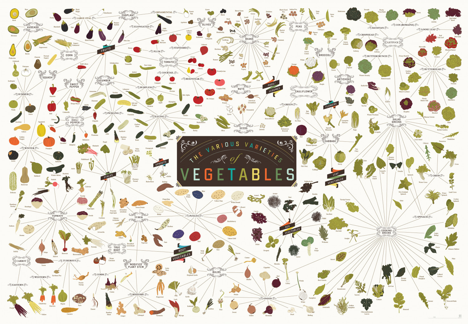 The Various Varieties of Vegetables Infographic