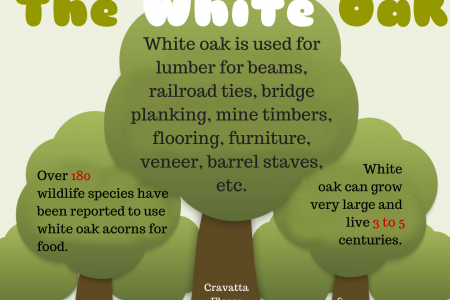 The White Oak Infographic