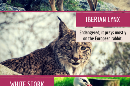 The Wildlife of Portugal  Infographic