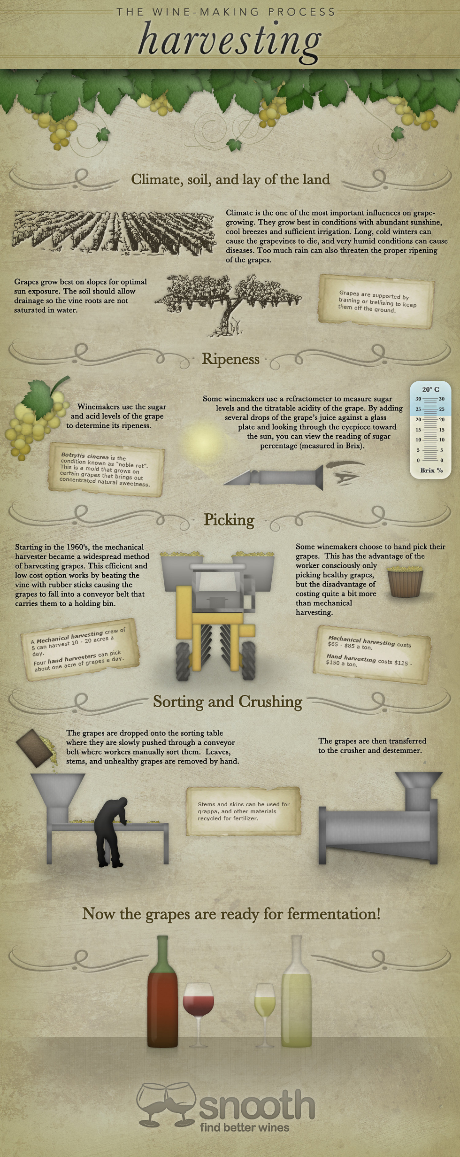 The Wine-Making Process: Harvesting Infographic