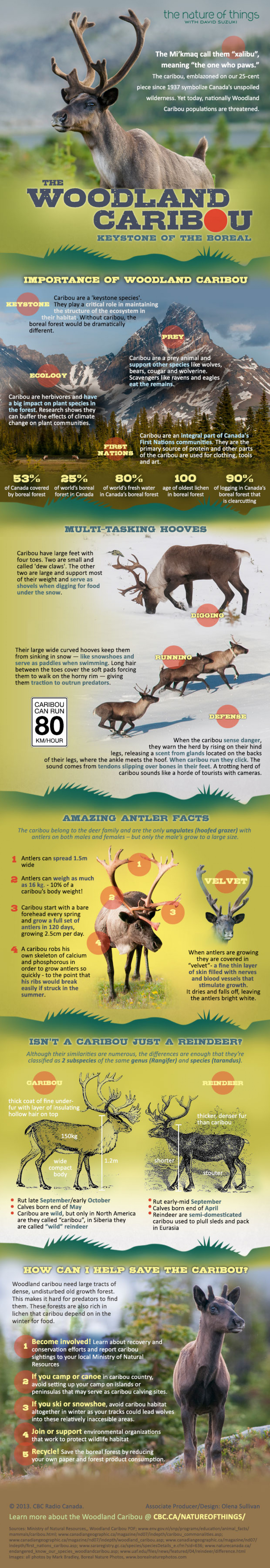 The Woodland Caribou Infographic