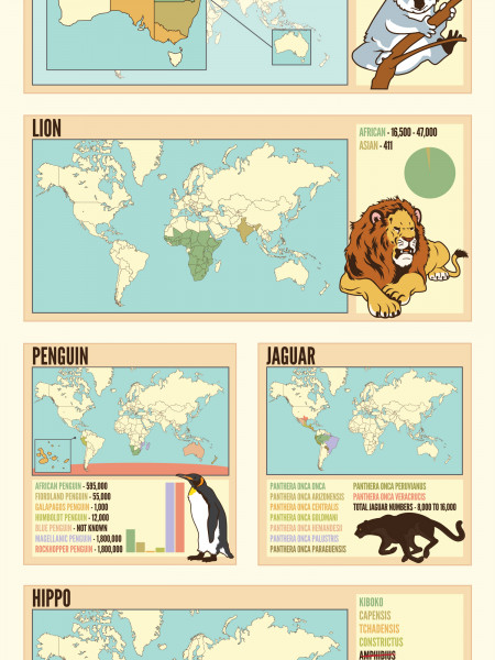The Worlds 21 Favourite Animals And Where To Find Them Infographic