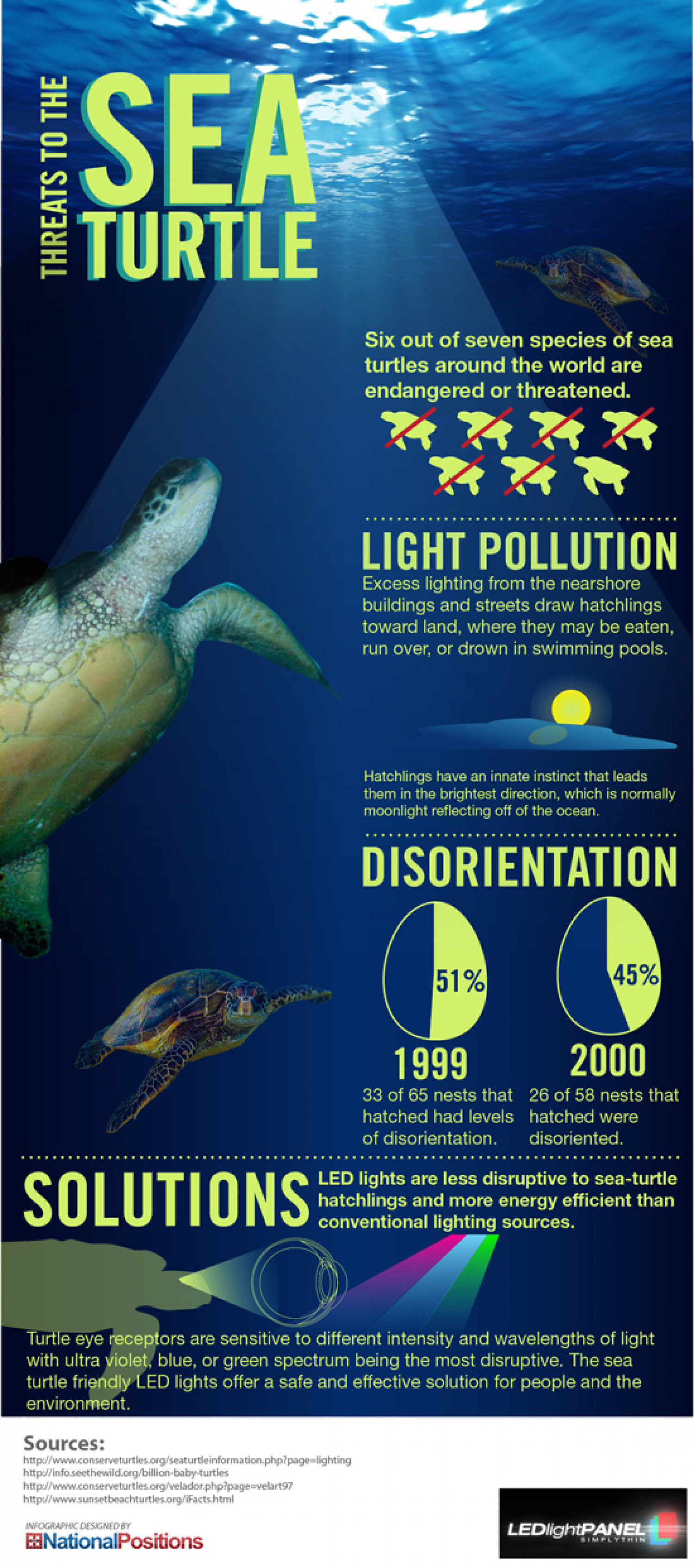 Threats To The Sea Turtles Infographic