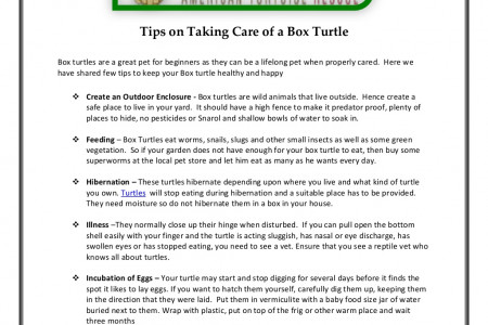 Tips on Taking Care of a Box Turtle Infographic