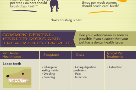 Toothy Topics: Your Guide to Pet Dental Care Infographic