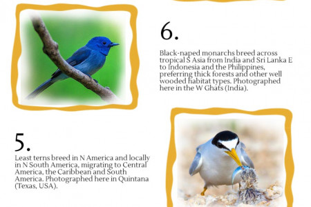 Top 10 Bird Photographs so far Infographic