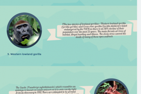 Top 10 Most Endangered Animals In the World Infographic