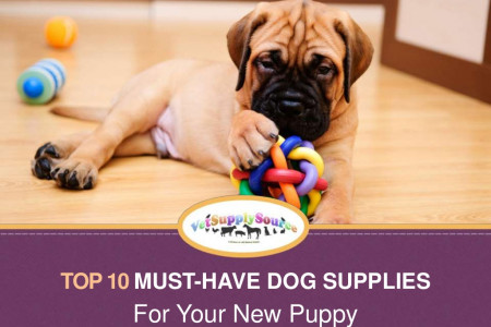Top 10 Must-Have Dog Supplies For Your New Puppy Infographic