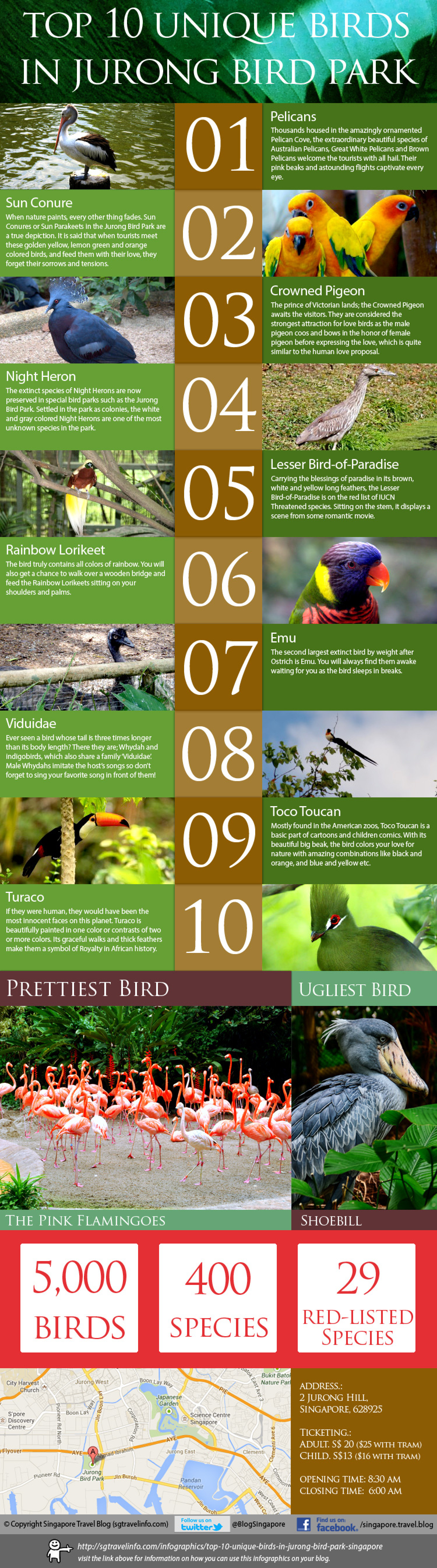Top 10 unique birds in Jurong Bird Park Singapore Infographic