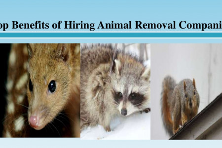 Top Benefits of Hiring Animal Removal Companies Infographic