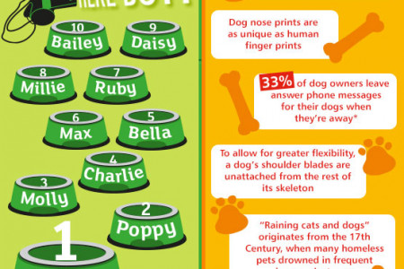 Top Dog Names & Breeds In 2013 Infographic