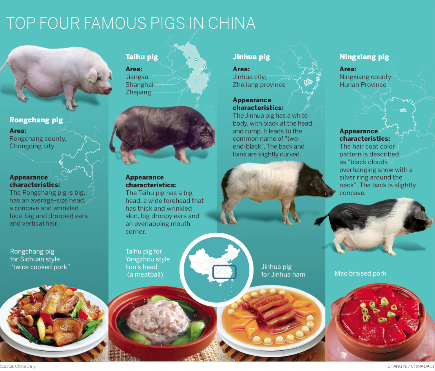 Top four famous pigs in china Infographic