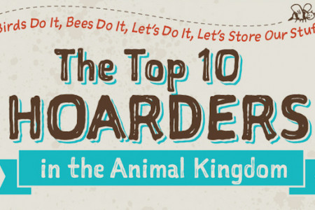 Top Hoarders in the Animal Kingdom Infographic