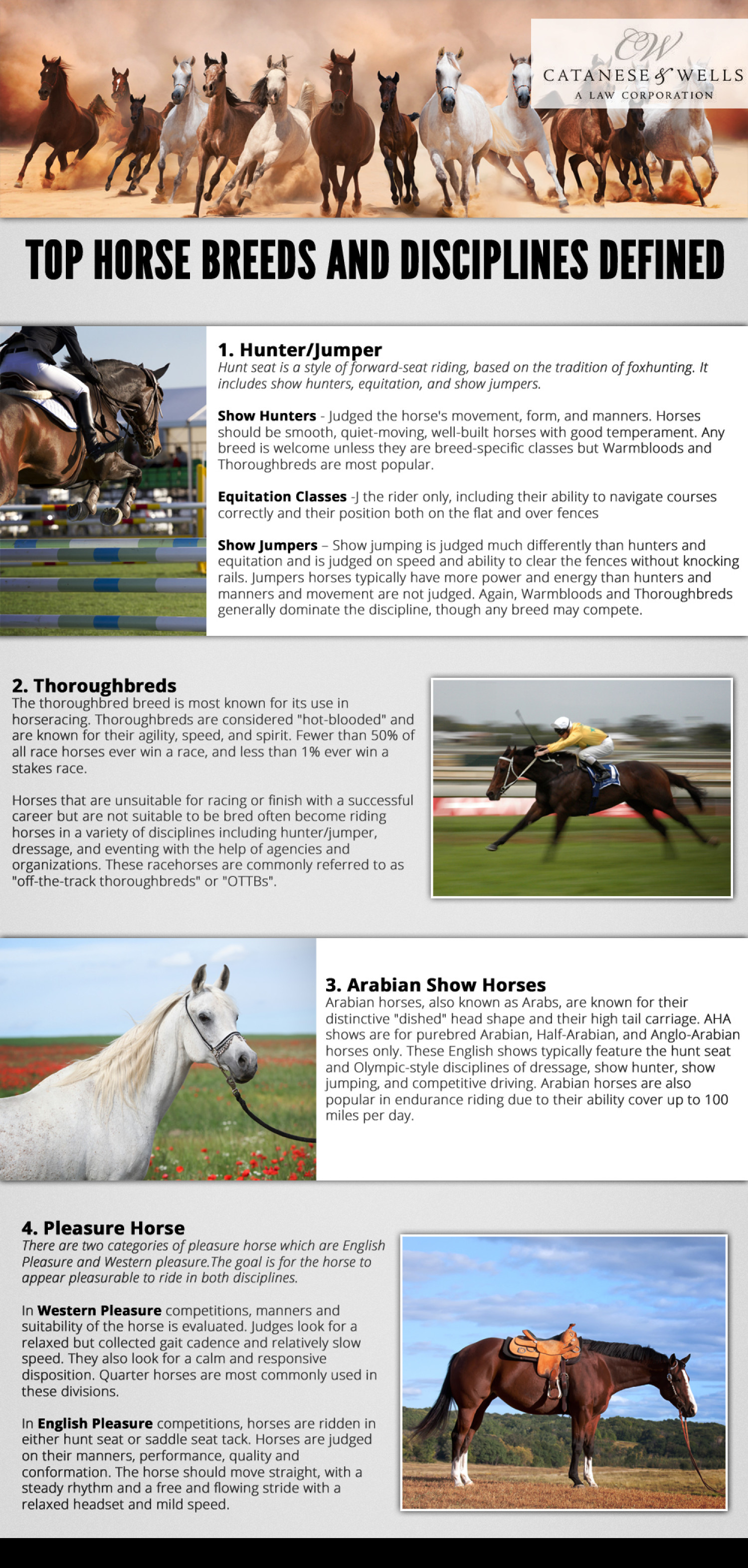 top horse breeds and disciplines defined visual ly top horse breeds and disciplines defined infographic