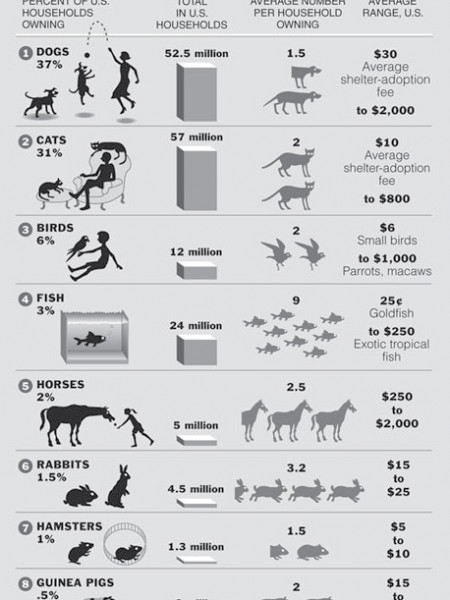 Top Ten Pets  Infographic