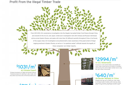 Tracking the Value of Oak Along the Supply Chain Infographic