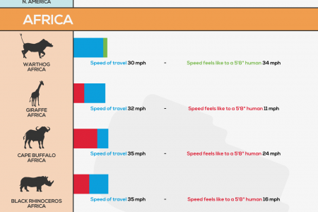 Travelling Speeds of Animals Infographic