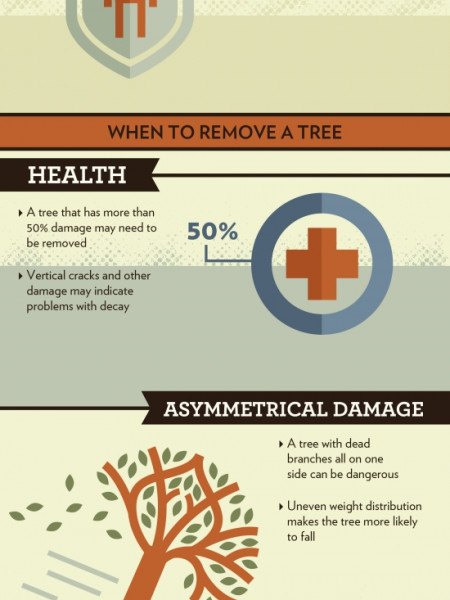 Trimming vs. Removing a Tree Infographic