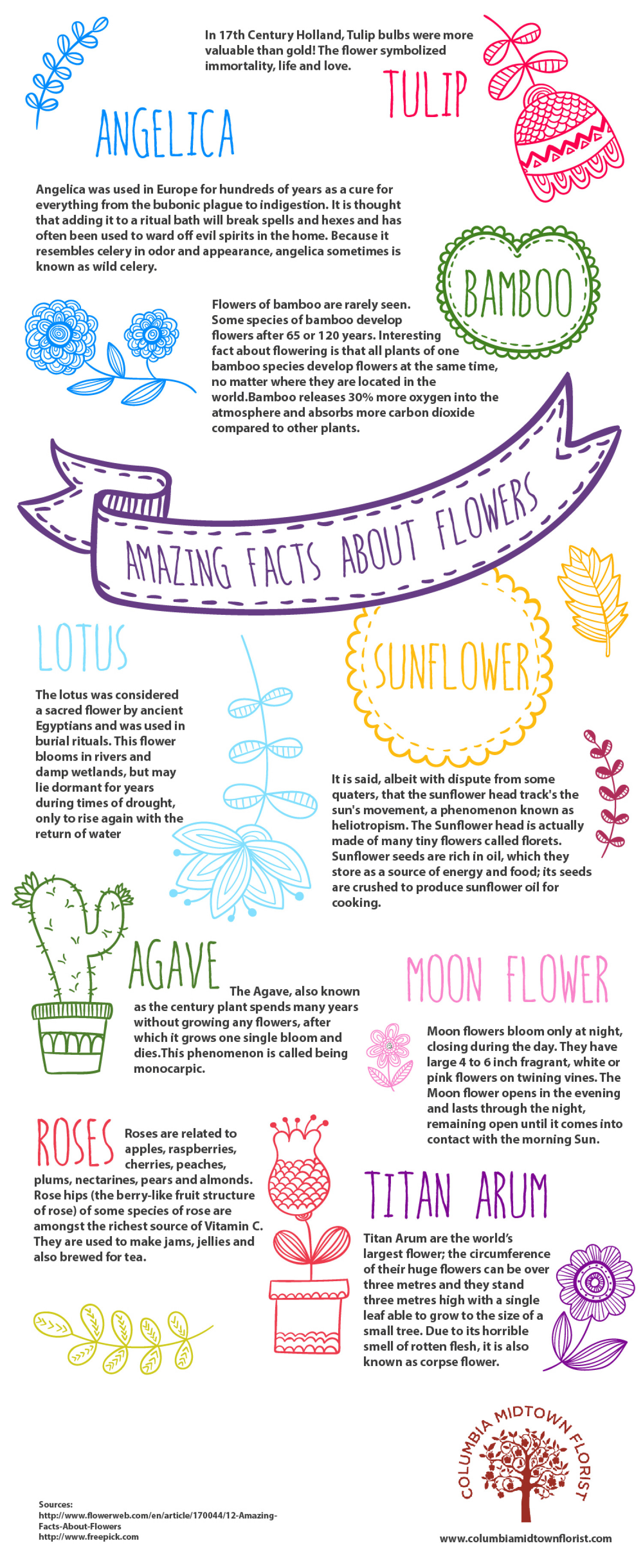 True Meaning of Flowers in Different Countries