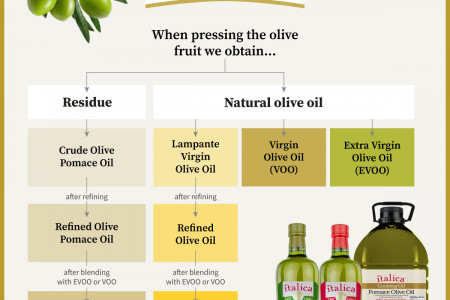 Types of Olive Oil Infographic