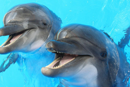 Understanding the Language of Dolphins Infographic