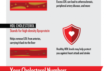Understanding Your Cholesterol Levels Infographic