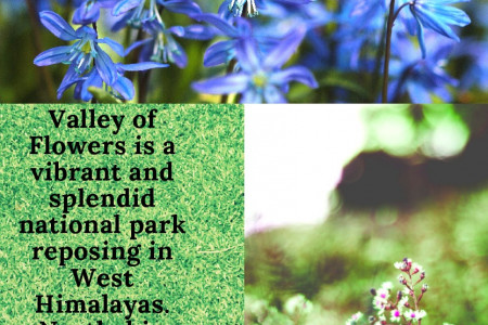 Valley Of Flowers Infographic