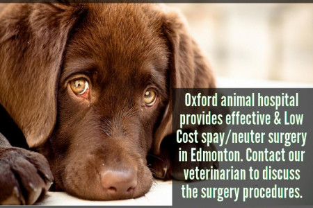 Veterinary Clinic in Edmonton, Alberta Infographic