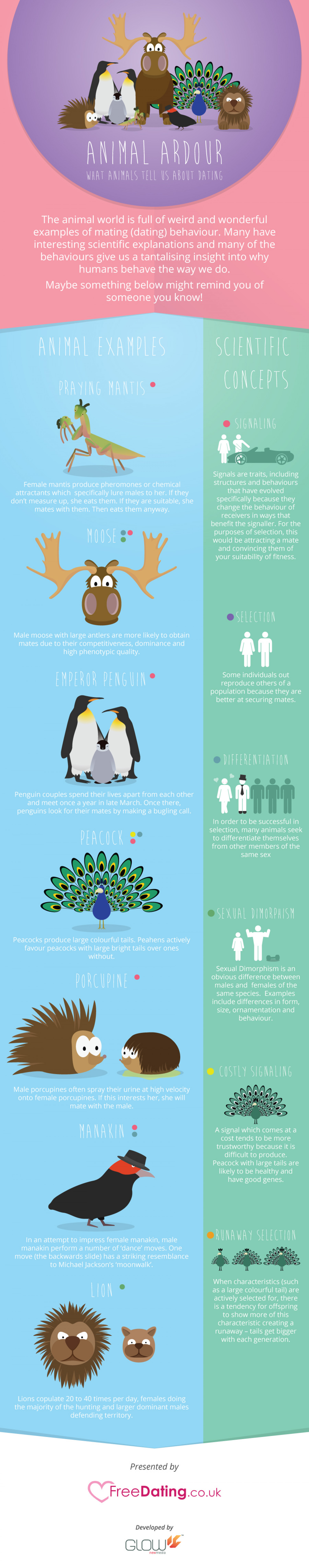 What Animals Tell Us About Dating Infographic