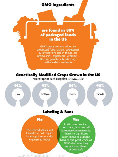 What Are GMO's? Infographic