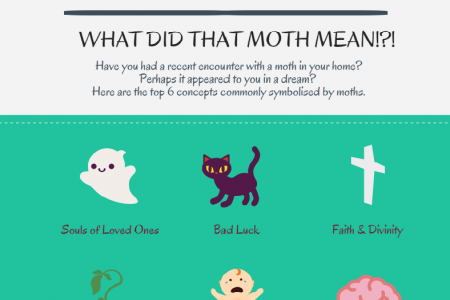 What did that moth mean?! Infographic