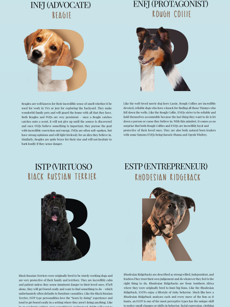 What Dog Breed Matches Your MBTI Personality? Infographic