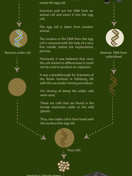 What is Cloning? Infographic