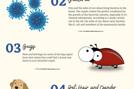 what is hiding in your carpet Infographic