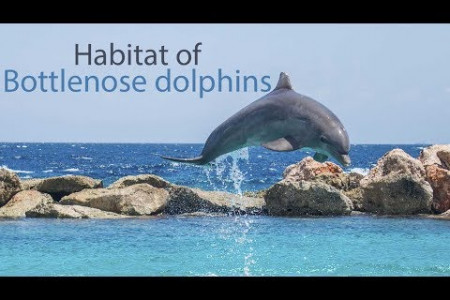 What Kind of Habitat does a Bottlenose Dolphin Live in?  Infographic