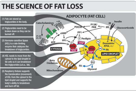 The Science of Fat Loss Infographic