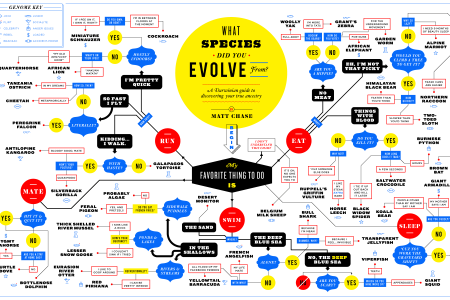 What Species Did You Evolve From? Infographic