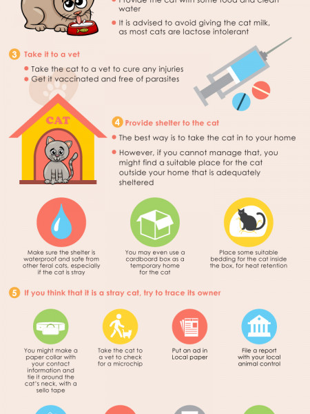 What to do if you Find a Stray or Feral Cat Infographic