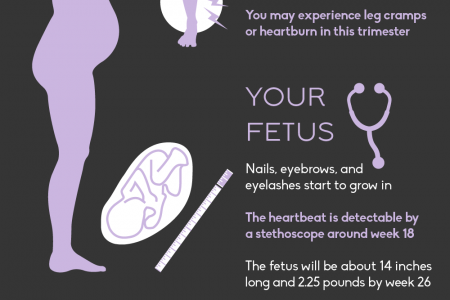 What to Expect Each Trimester of Pregnancy Infographic