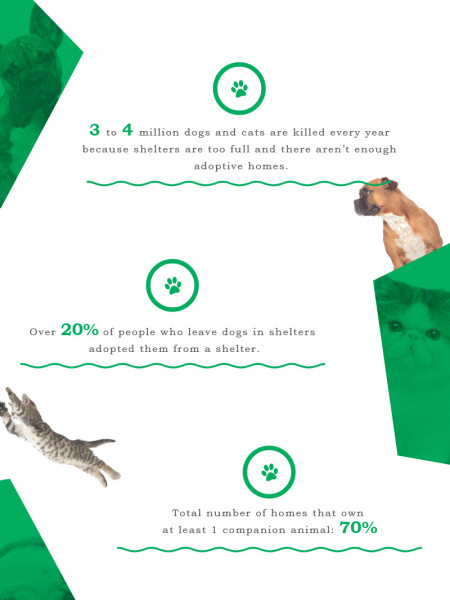 What Wikipedia Can't Tell You About Animal Shelters Infographic